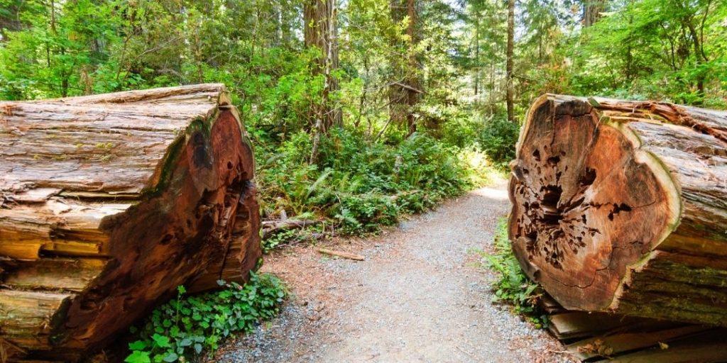 Redwood National Park Guide_Trekkerr